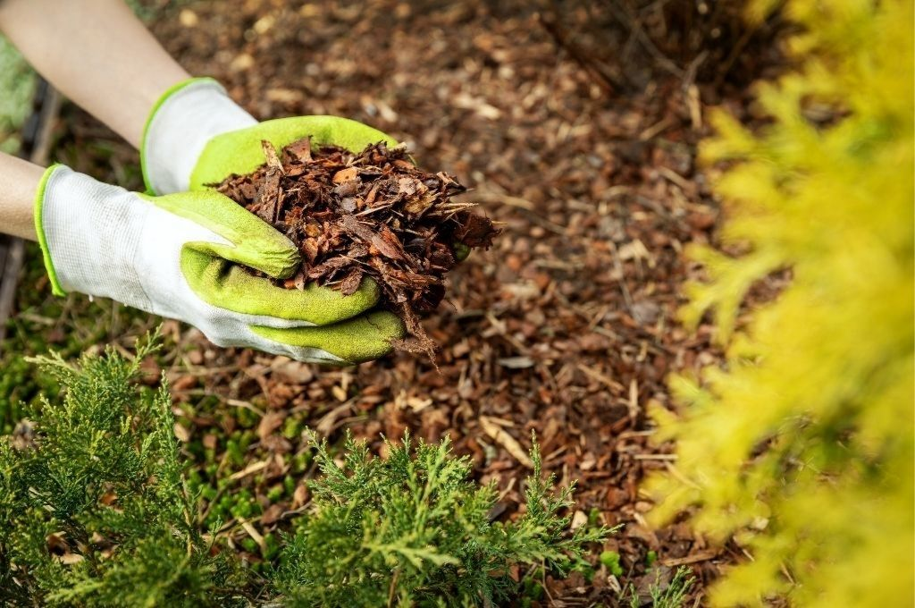 Hands with gardening gloves applying organic mulch to a residential property.