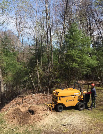 An American Climbers worker uses a stump grinder to grind up a tree stump