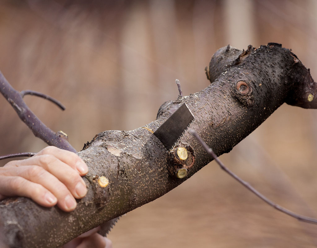 Closeup of a hand on a large branch, cutting that branch with a small saw