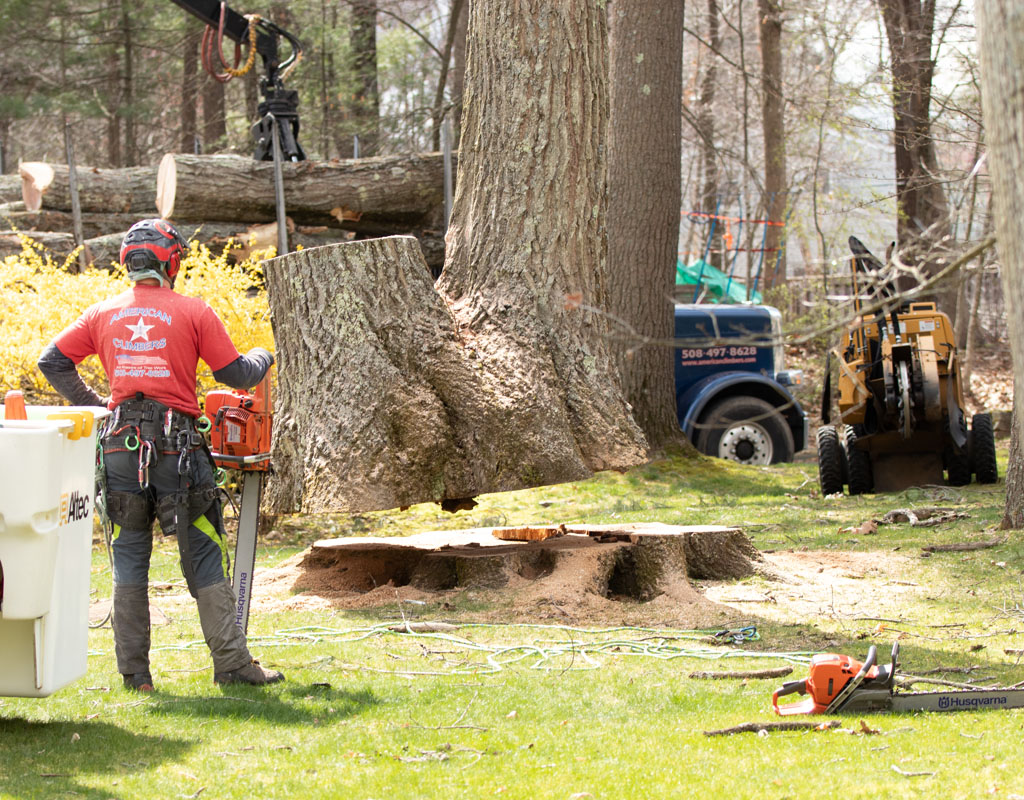 Members of the American Climbers remove a large tree, leaving a tree stump behind